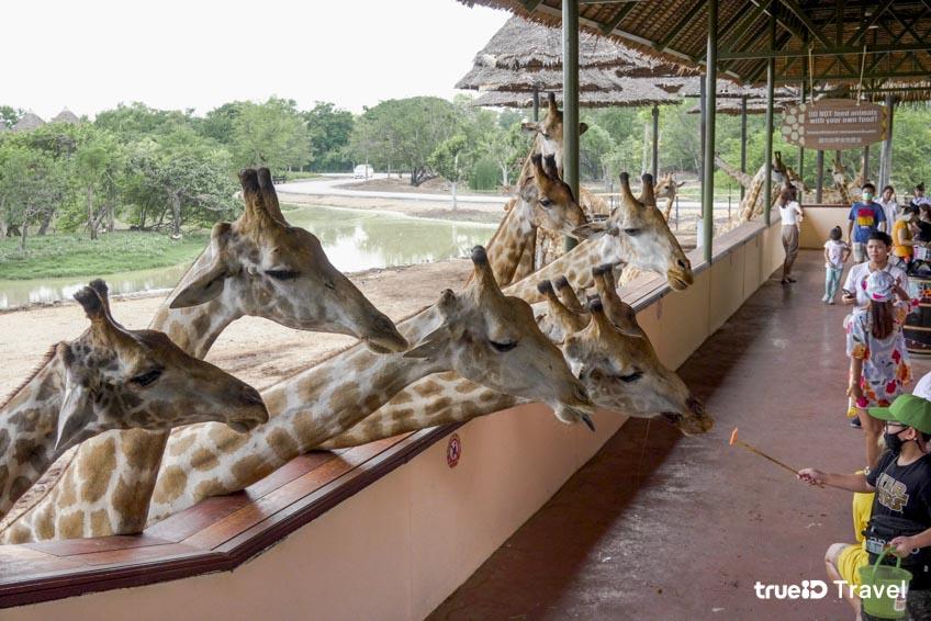Giraffe Terrace